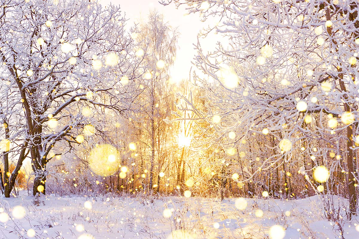 Let There Be Light: Sensitivity to Winter Holidays